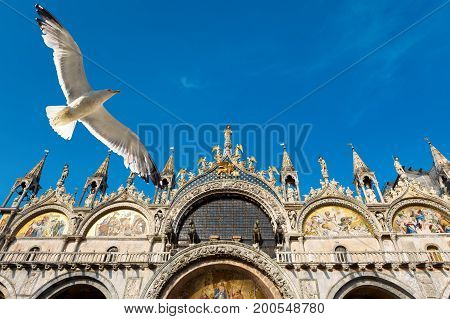 Basilica di San Marco (Saint Mark`s Basilica) and flying seagull in Venice, Italy. Basilica di San Marco was built in the 12th century and is the main tourist attraction of Venice.