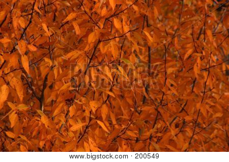 Fall Leaves Background 2