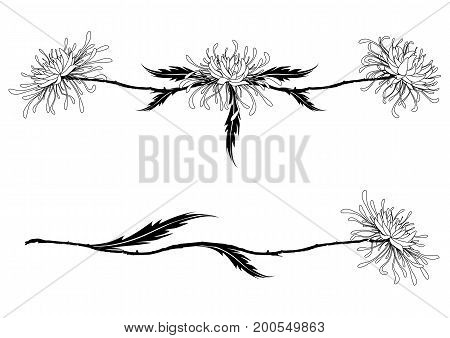 set of vector dividers with chrysanthemums in black and white