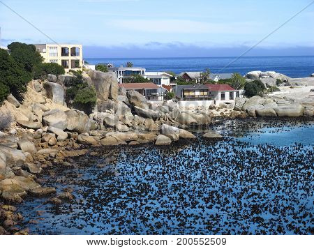 FROM CAMPS BAY, CAPE TOWN SOUTH AFRICA, WITH A MASS  OF SEA WEED IN THE FORE GROUND WATER