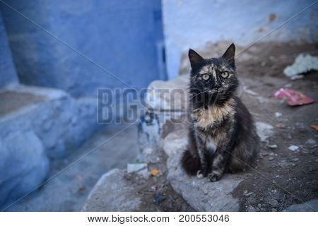 Cat In Chefchaouen, The Blue City In The Morocco.