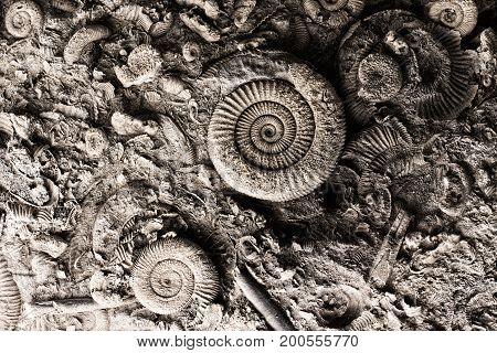 Fossils In Rock