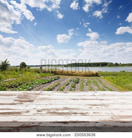 Empty white wooden table. Rows of plants in cultivated farmers field. Summer background, mock up for design