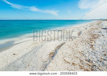 Blue sea in Stintino shoreline. Sardinia Italy