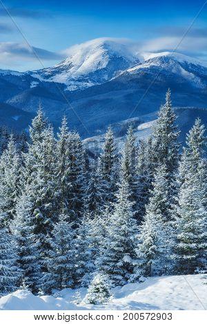 Misty Winter Mountain
