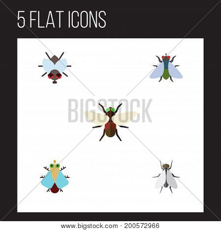 Flat Icon Buzz Set Of Buzz, Fly, Bluebottle And Other Vector Objects
