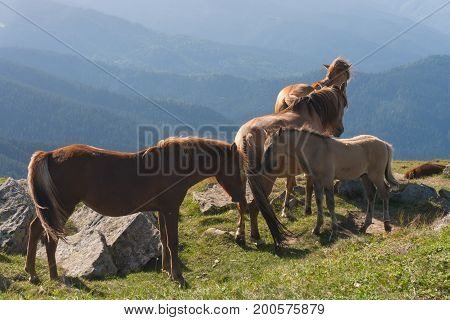 A herd of horses grazing in a meadow.