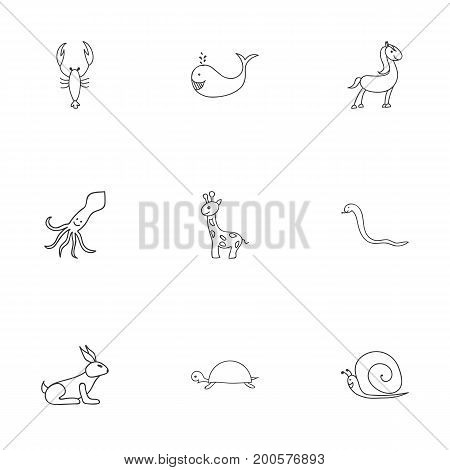 Set Of 9 Editable Zoology Doodles. Includes Symbols Such As Tortoise, Pony, Lobster And More