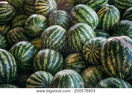 Group of big sweet green watermelons, watermelon background