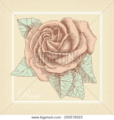 Square card with a vintage hand drawn rose. Vector illustration.