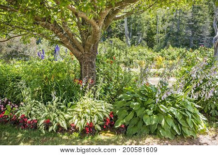 Beautiful Full Landscaped Country Garden With Tree Providing Shade To Hostas, Begonias And Other Col