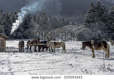 The horses are tethered on a winter day in the mountains