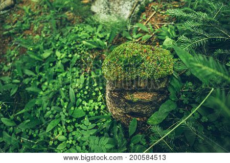 stump with moss in the forest close up