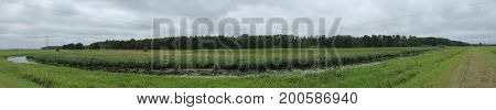 Panoramic View Of Extensively Used Meadows Beneath The Stream Ryck Near Heilgeisthof, Mecklenburg-vo