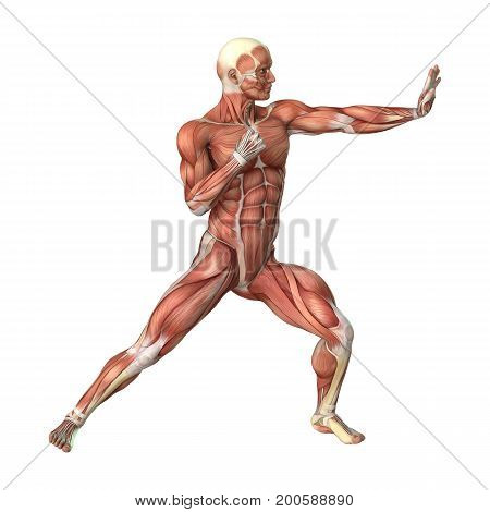3D Rendering Male Figure Muscle Maps On White
