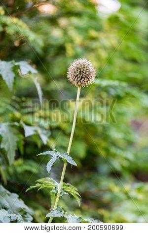 Unusual Prickly Flower