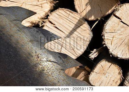 Saw circular saw blade at wood. Industry
