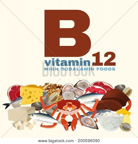 High vitamin B12 Foods. Healthy seafood, meat, fish, crab, cottage cheese, liver and oysters. Vector illustration isolated on a light beige background.