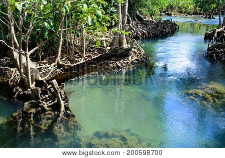 The Tha pom Klong Song Nam at KrabiThailandAmazing nature of mangrove forests and the clarity of blue water in central of mangrove forest.