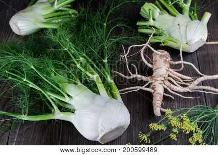 Raw fennel bulbs with green stems and leaves, fennel flowers and root ready to cook on  dark wooden background