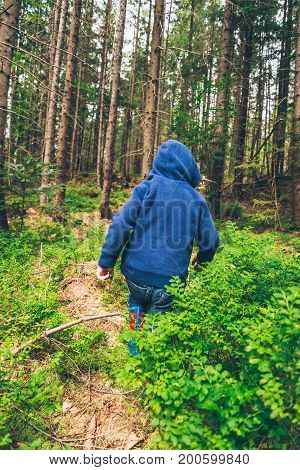 Little kid eat blueberry in the forest, active childhood
