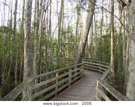 Florida Cypress Swamp 2279