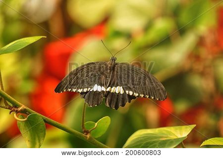 Beautiful butterfly in zoological garden poster