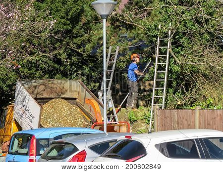 WREXHAM WALES UNITED KINGDOM - MARCH 15 2017: Tree surgeon pruning branches at the perimeter of a car park on a sunny day. Chippings in a raised tip up truck.