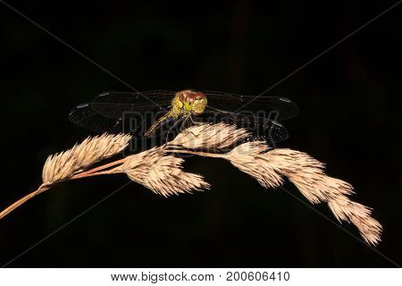 Beautiful dragonfly with transparent wings on a dark background. Animals in wildlife.