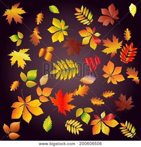 Set Leaf Fall From Bright, Colorful Autumn Leaves On A Dark Background. Chestnut, Maple, Oak, Birch,