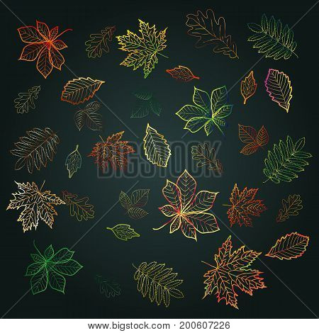 Set Leaf Fall, Outlines Of Bright, Colorful Autumn Leaves On A Dark Background. Chestnut, Maple, Oak