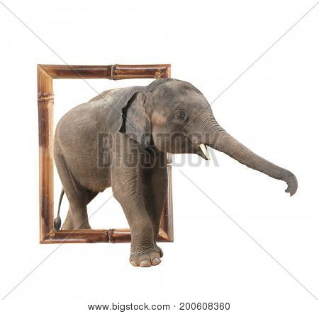 Baby elephant (Elephas maximus) in bamboo frame with 3d effect. Isolated on white background