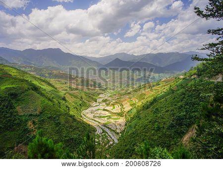 Terraced Rice Field In Northern Vietnam