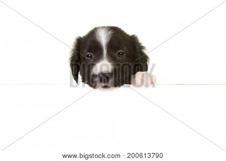 Puppy border collie with its paw on a message board