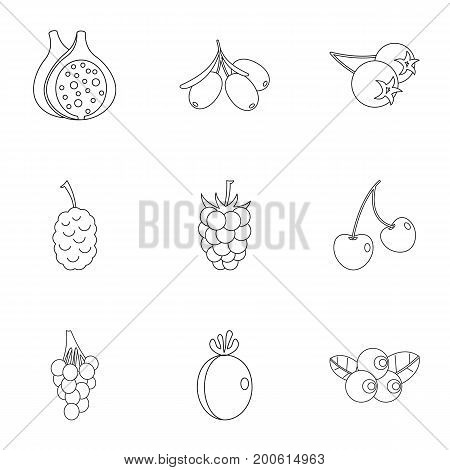 Natural berries icon set. Outline set of 9 natural berries vector icons for web isolated on white background
