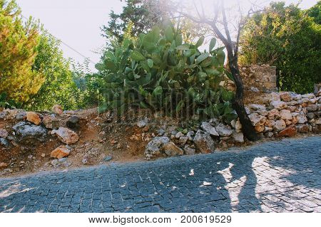Alanya, Turkey, July 2017: cactus leaves with autographs of tourists on the road leading to the mountain to Alanya Castle.
