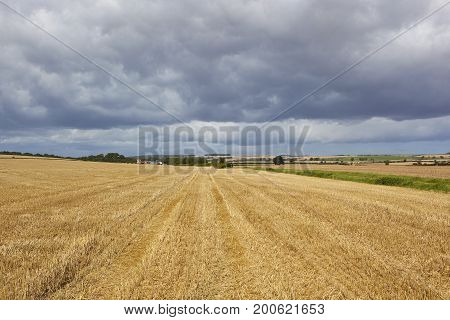 Harvested Field And Scenery