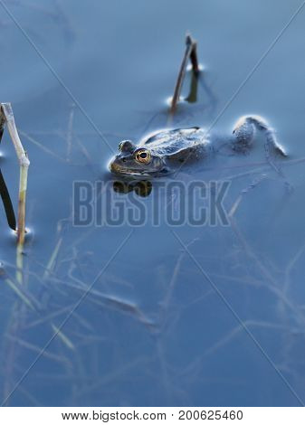 The frog sits in clear clear water