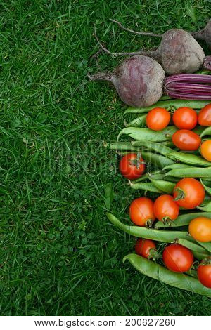 Line Of Fresh Vegetables On Green Grass