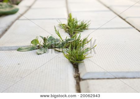 Grass Grows On The Pavement