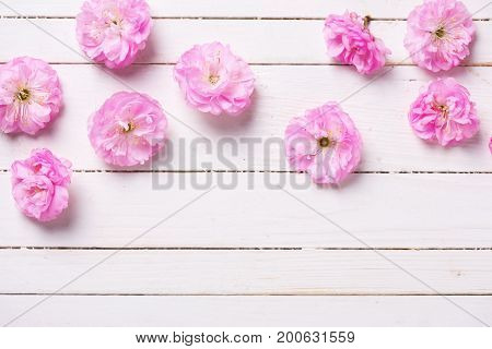 Border from tender pink sakura flowers on white painted wooden planks. Selective focus. Place for text. Top view.