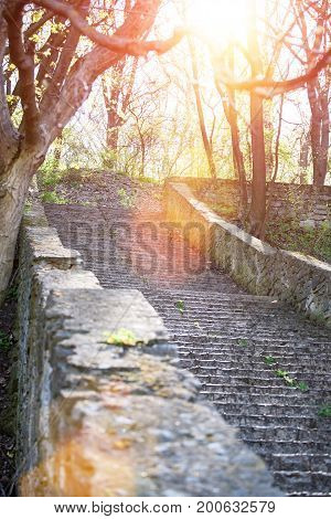 An old staircase in the city park. Ruined steps in the forest. An overgrown path of the park. Ancient steps in the rays of the setting sun.