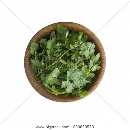 Fresh coriander leaves in wooden bowl isolated on white background. Top view. Coriander with copy space for text.