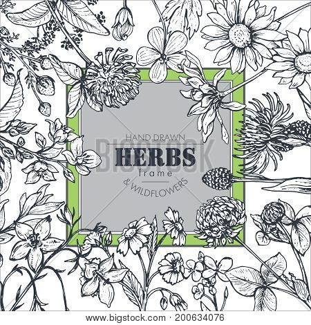 Vector frame with black and white hand drawn herb and wildflower elements for wedding invitations, birthday cards, banners.