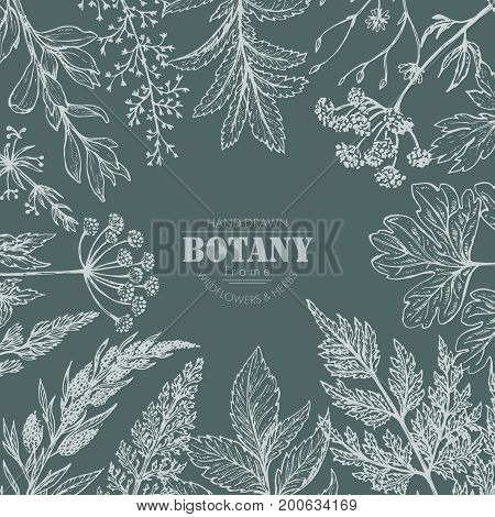 Vector frame with hand drawn herb and wildflower elements for wedding invitations, birthday cards, banners.