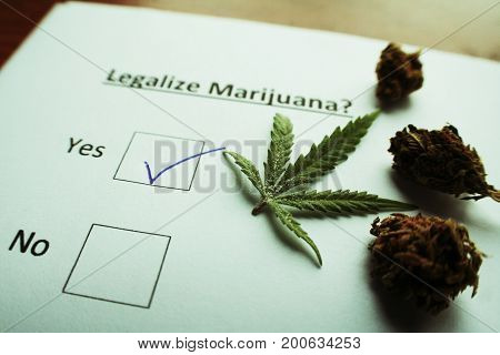 Legalize Marijuana With Buds On Ballot High Quality