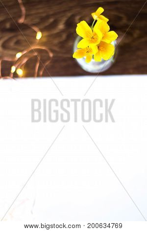 Flowers in a glass bulb near a white sheet of paper