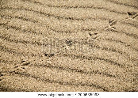 bird foot print on dry sand under sun light with grass shadow