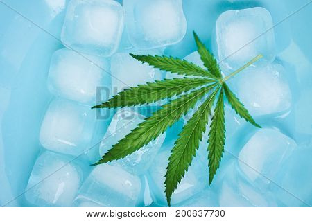 Cannabis Leaf Texture Marijuana Leaf On Ice Frozen Cubes Background With A Flat Vintage Style In Blu