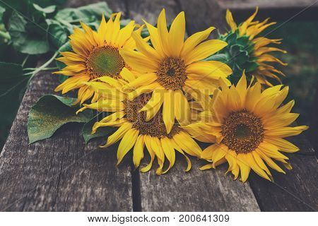 Sunflowers on a wooden table, copy space, side view. Organic farming rustic background. Harvest at agricultural production business.